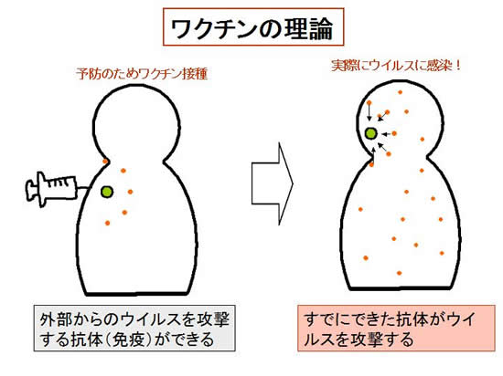 ワクチン た インフルエンザ 腫れ